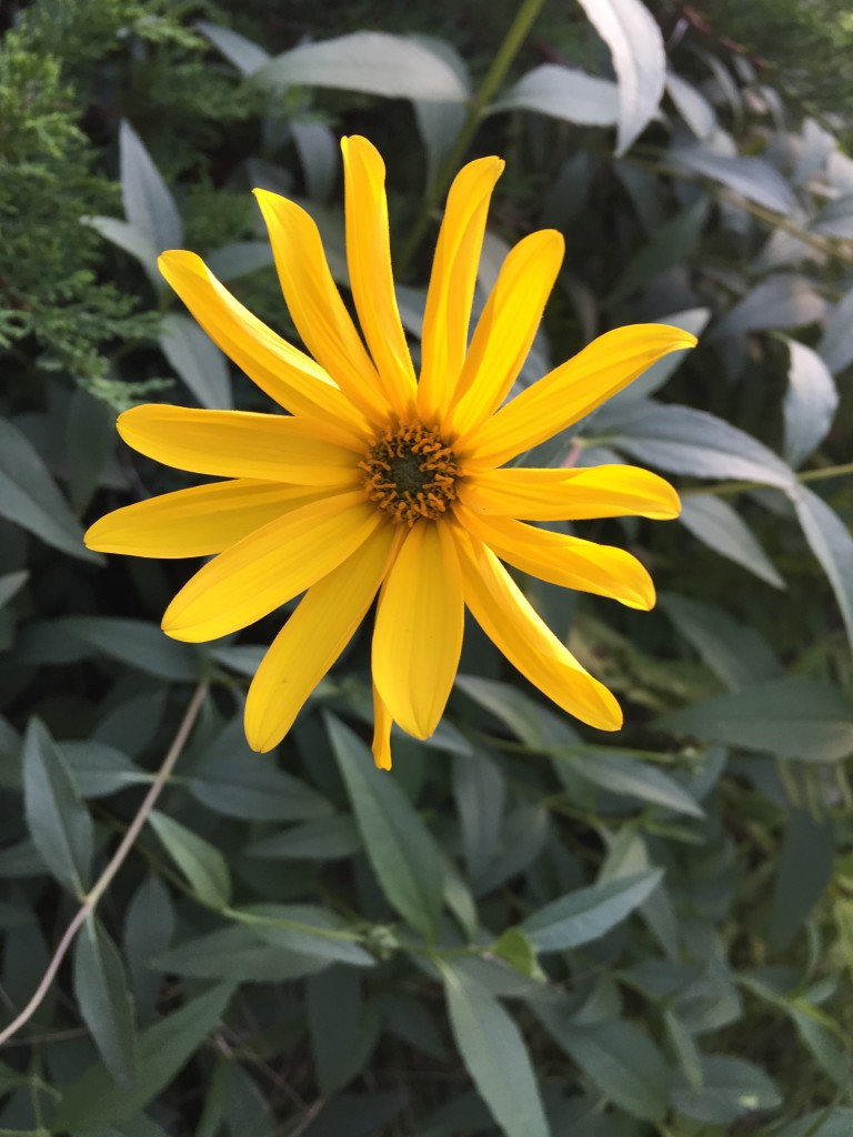 Sonnengelbe Blüte