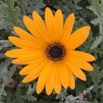 Madeira-Blumen-08