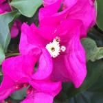 Madeira-Blumen-12