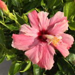 Madeira-Blumen-14