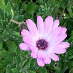 Madeira-Blumen-17