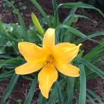 Madeira-Blumen-18