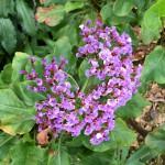 Madeira-Blumen-20