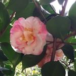 Madeira-Blumen-21