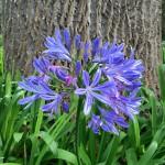 Madeira-Blumen-22