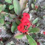 Madeira-Blumen-23