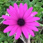 Madeira-Blumen-25