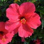 Madeira-Blumen-28
