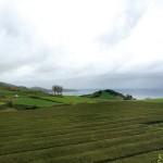 Teegarten Gorreana
